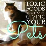 Toxic foods you may be giving your pets