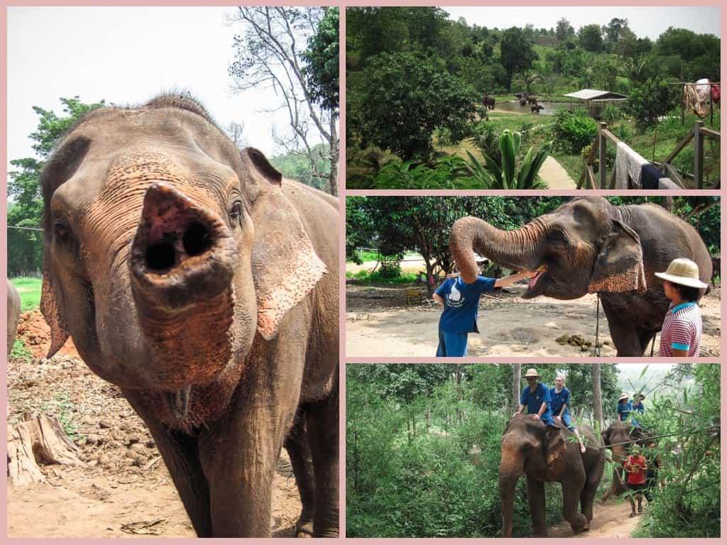 Baan Chang Elephant Park in Chiang Mai, Thailand