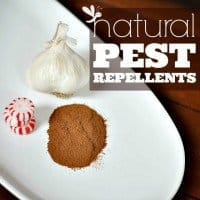 natural pest repellents