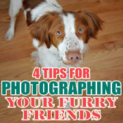 4 Tips for Photographing Your Furry Friends