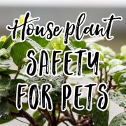 House Plant Safety for Pets_pin