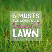6 Musts for Achieving a Beautiful Lawn