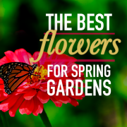 The Best Flowers for Spring Gardens
