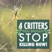 4 Critters You Should Stop Killing NOW