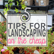 5 tips for landscaping on the cheap