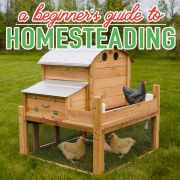 A BEGINNERS GUIDE TO HOMESTEADING