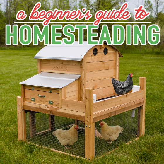 A Beginner's Guide to Homesteading