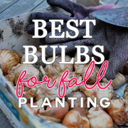 best-bulbs-for-fall-planting