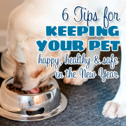 6 Tips for Keeping your Pet happy  healthy and safe in the New Year-1