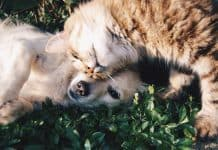 6 tips for keeping your pet happy, healthy, and safe in the new year