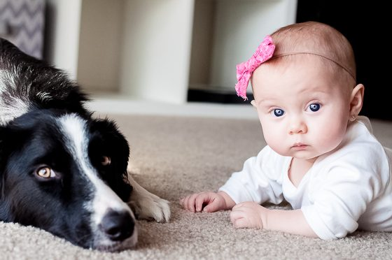 9 Activities To Enjoy With Your Baby And Dog Daily Mom