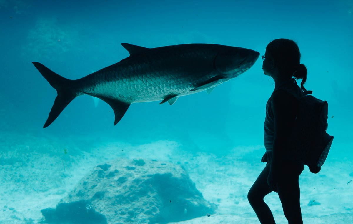 atlantis-nassau-bahamas (48)