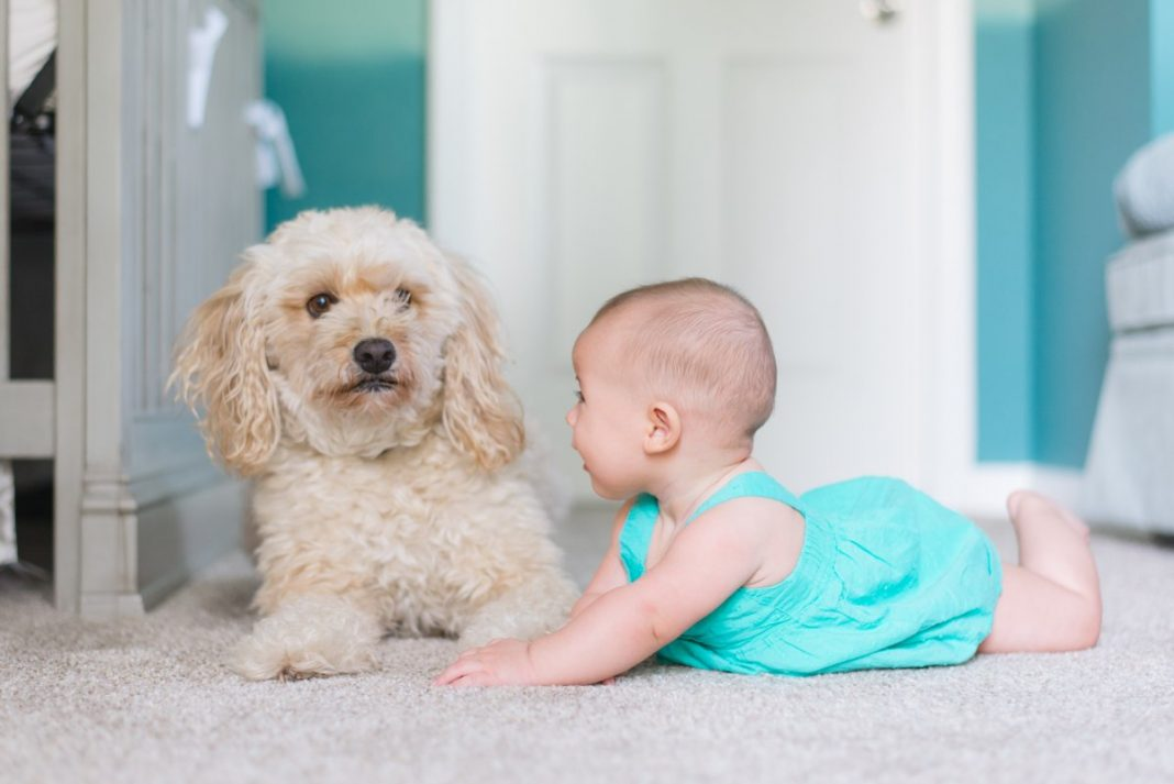 activities for baby and dog