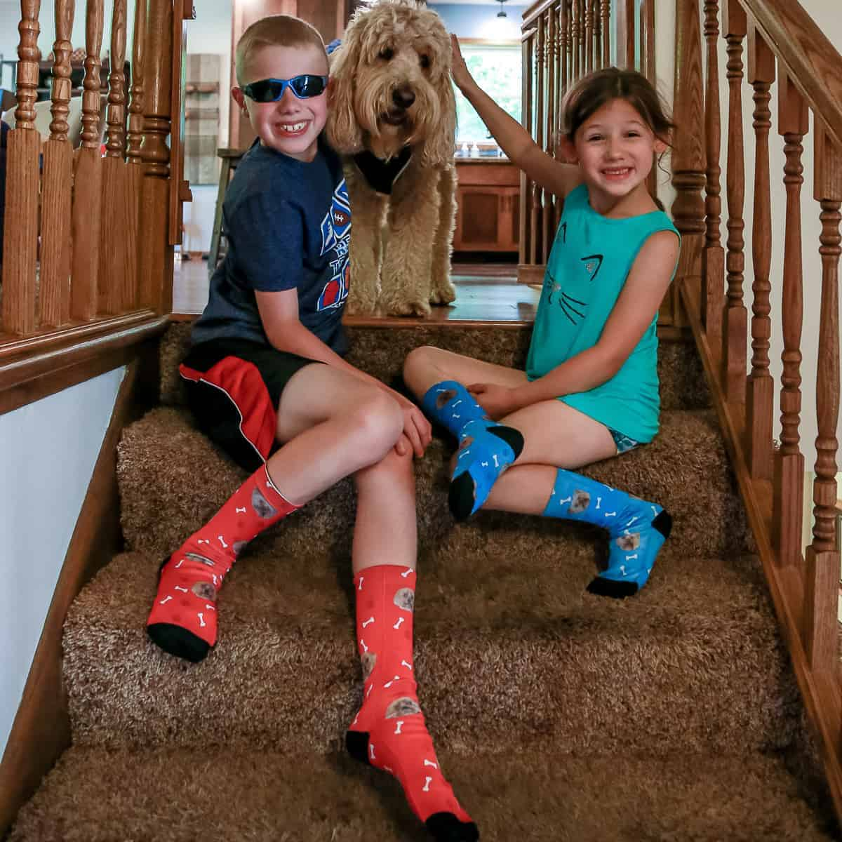 pet-socks-dog-4