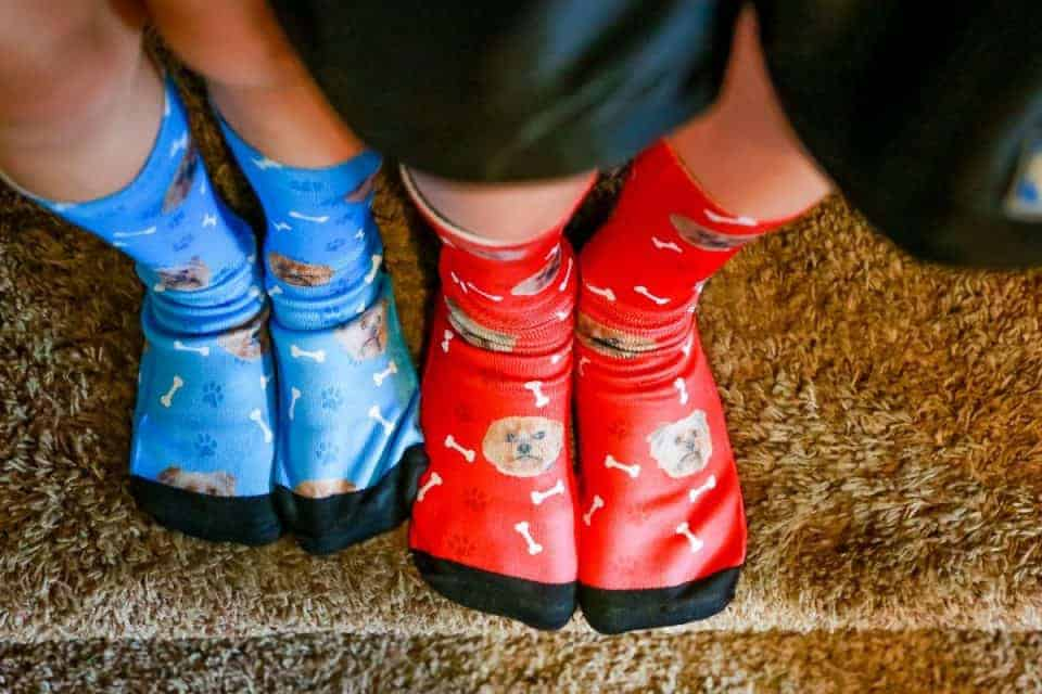 pet-socks-dog-5