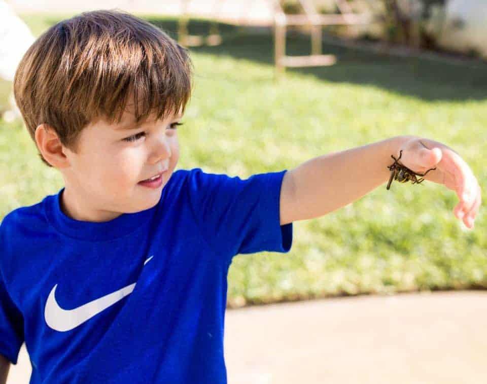 Jake-Grasshopper-pic