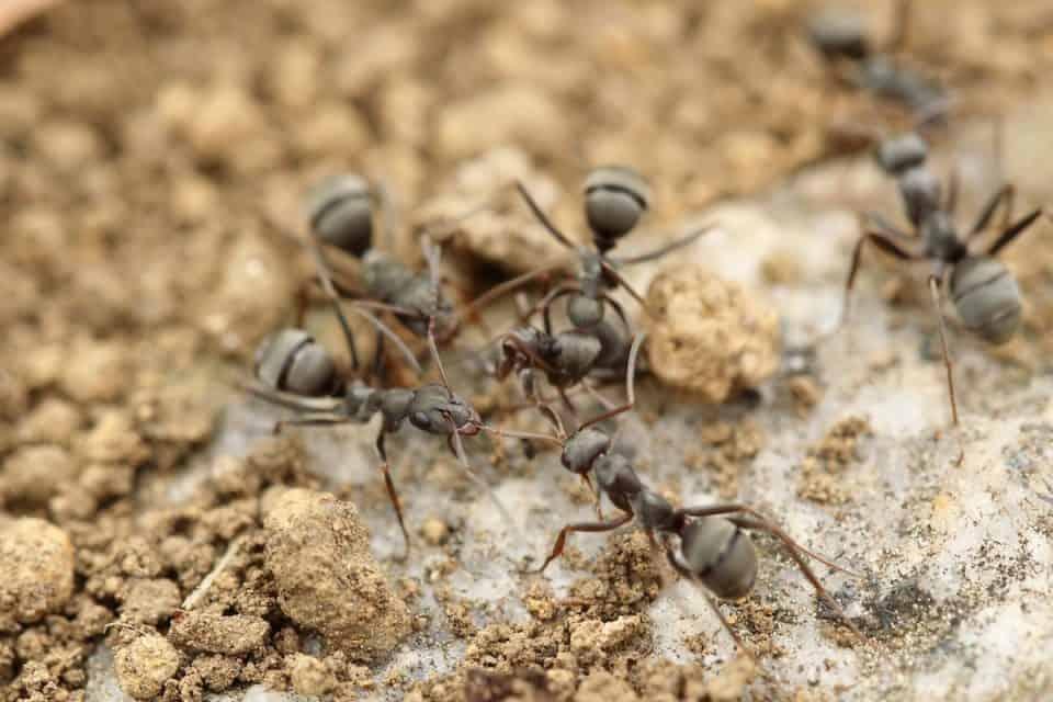 bug-hunt-2