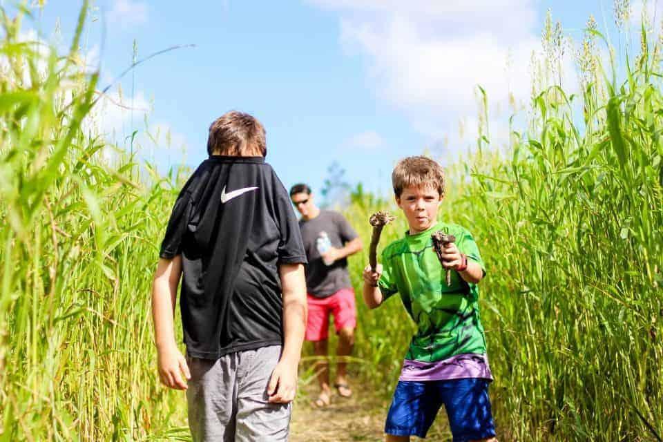 Corn Maze5