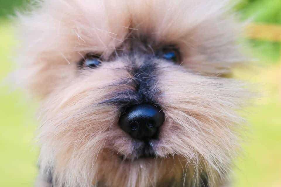 petsie-dog-4