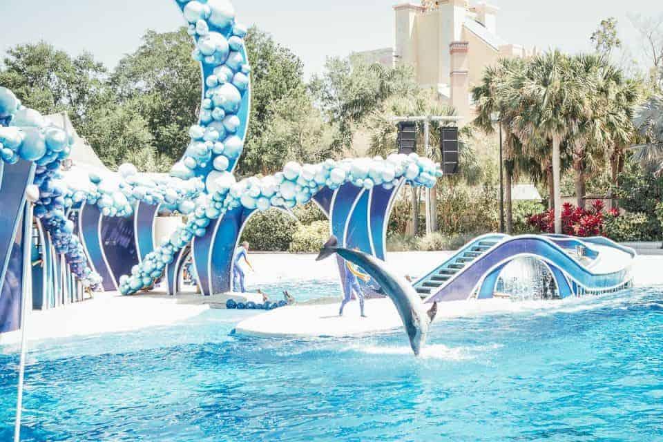 seaworld-orlando-theme-park (21 of 58)