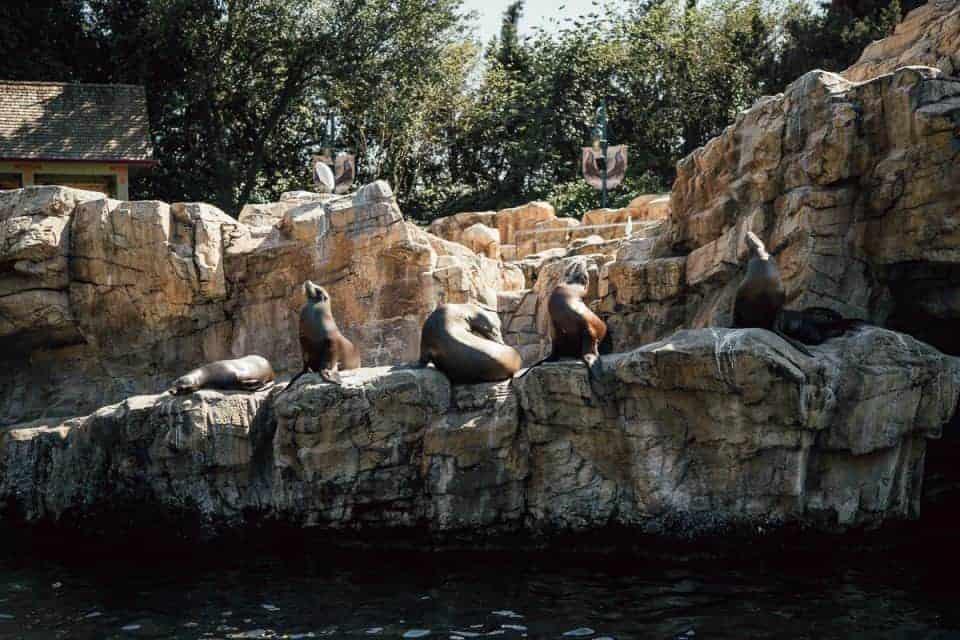 seaworld-orlando-theme-park (37 of 58)