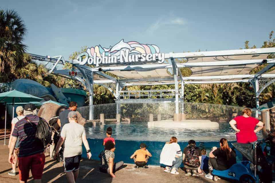 seaworld-orlando-theme-park (51 of 58)