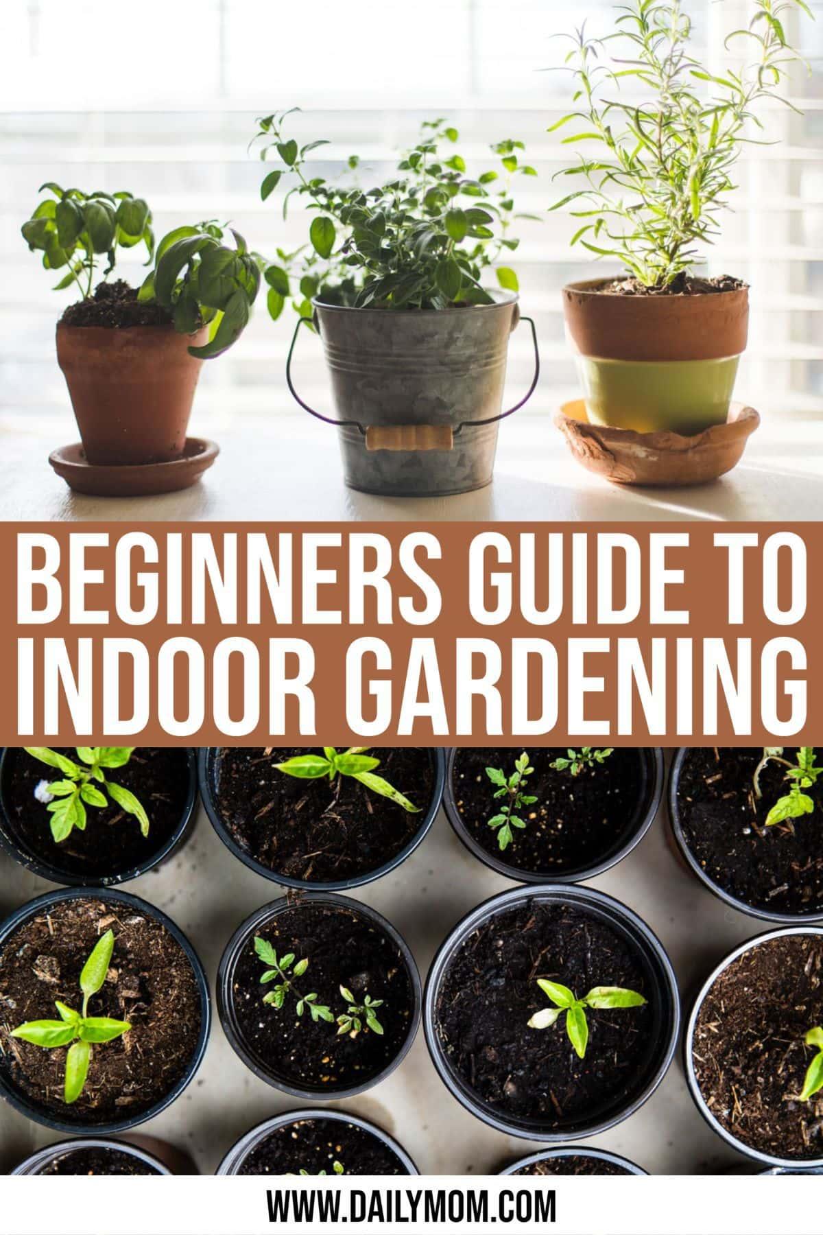 6 Helpful Tips To Get You Indoor Gardening-daily-mom-parent-portal