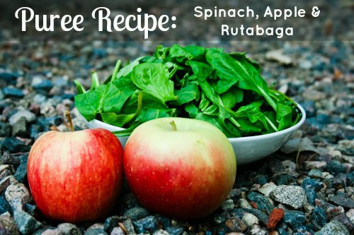 Puree Recipe: Spinach, Apple and Rutabaga 1 Daily Mom Parents Portal