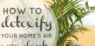 Detoxify Your Home's Air With Plants