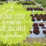 Seasonal Guide To Planting Your Vegetable Garden