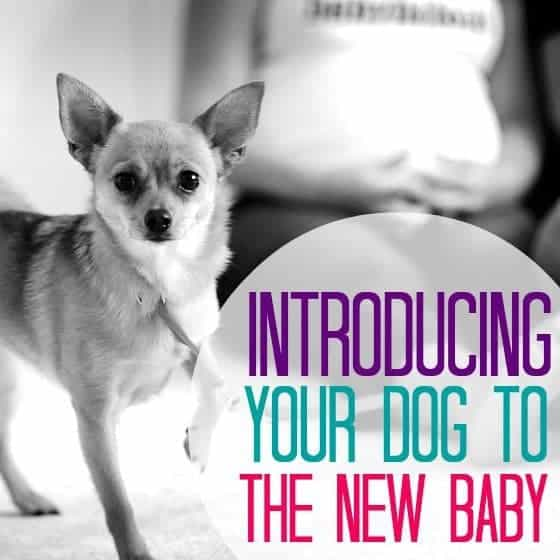Introducing Dog To New Baby