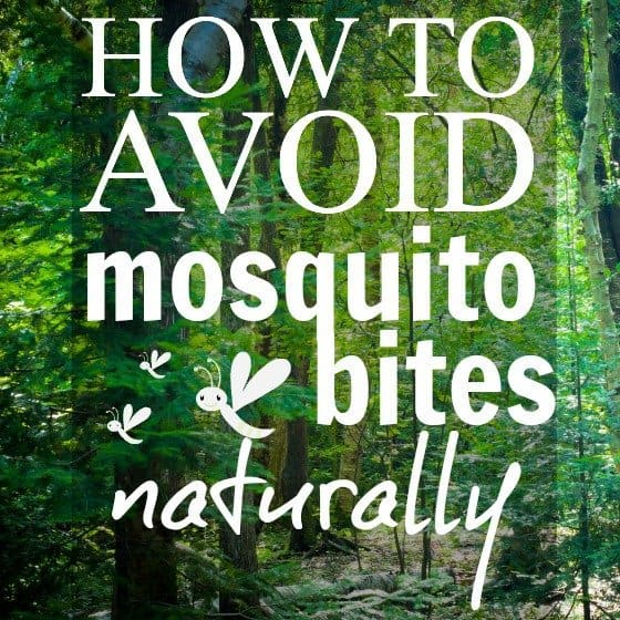 How to Avoid Mosquito Bites Naturally 1 Daily Mom Parents Portal