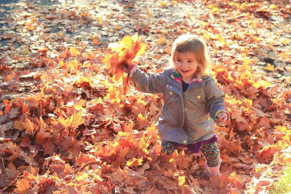 Fall Tradition Bucket List 5 Daily Mom Parents Portal