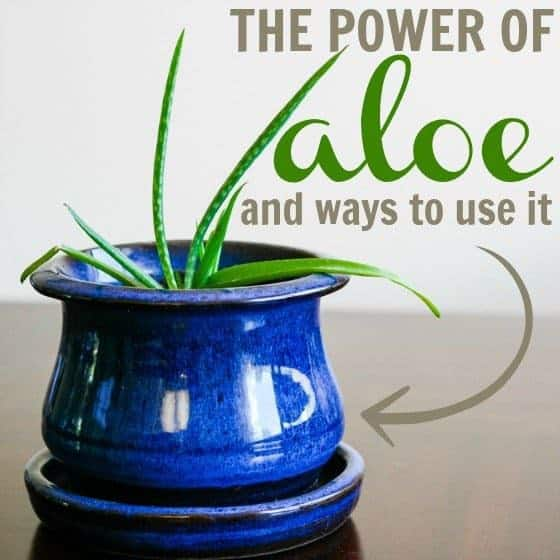 The Power of Aloe: surprising ways to use it 2 Daily Mom Parents Portal