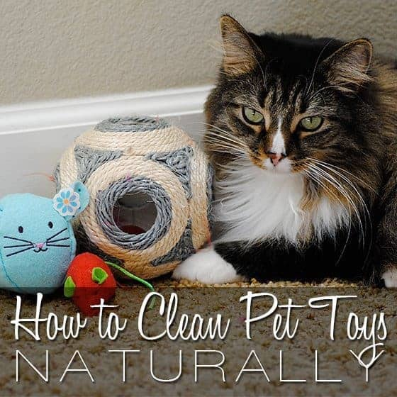 How To Clean Pet Toys Naturally 1 Daily Mom Parents Portal