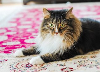 How To Remove Pet Stains Naturally And Effectively