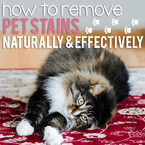 How To Remove Pet Stains Naturally And Effectively 1 Daily Mom Parents Portal