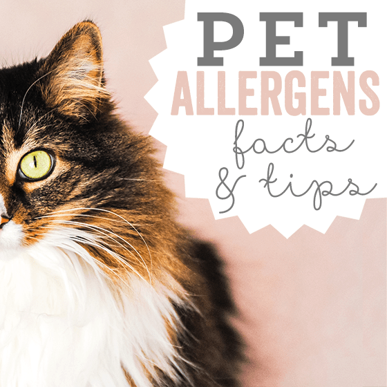 Pet Allergens: Facts And Tips