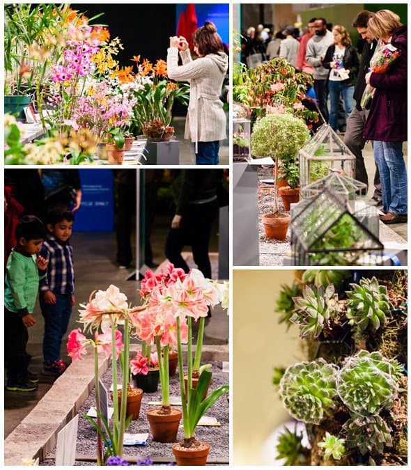 Fun for Families: Philadelphia Flower Show 20 Daily Mom Parents Portal