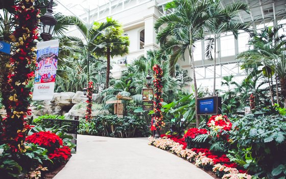 Celebrating the Holidays with Gaylord Palms Orlando 18 Daily Mom Parents Portal