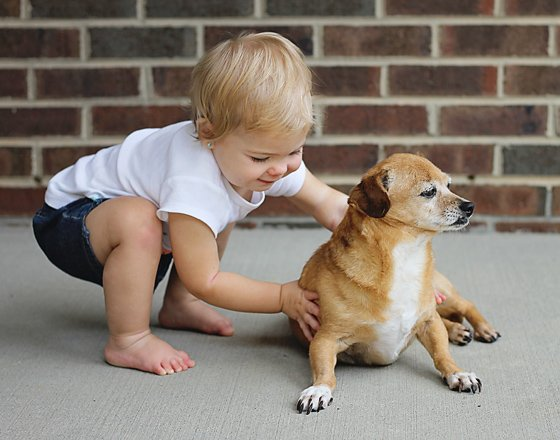 4 TIPS FOR PHOTOGRAPHING YOUR FURRY FRIENDS 2 Daily Mom Parents Portal