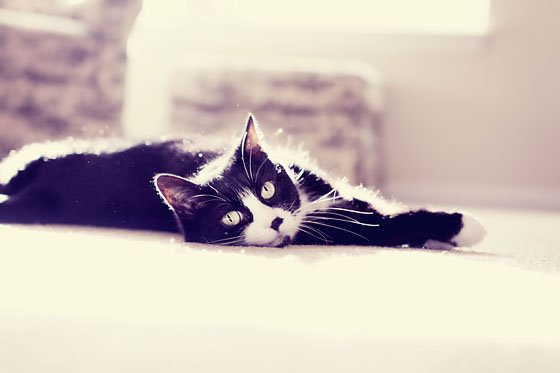 4 TIPS FOR PHOTOGRAPHING YOUR FURRY FRIENDS 4 Daily Mom Parents Portal