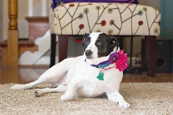 4 TIPS FOR PHOTOGRAPHING YOUR FURRY FRIENDS 5 Daily Mom Parents Portal