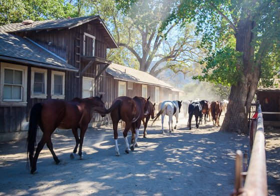 Rustic Elegance for Families: The Alisal Guest Ranch Resort 4 Daily Mom Parents Portal