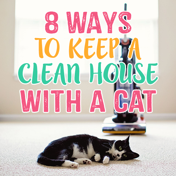 8 Ways to Keep a Clean House with a Cat 1 Daily Mom Parents Portal