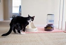 8 Ways To Keep A Clean House With A Cat