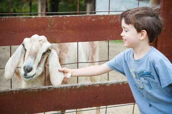5 Ways to Explain Vegetarianism to Kids 2 Daily Mom Parents Portal