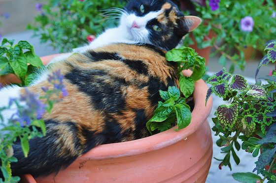 Houseplant Safety for Pets 2 Daily Mom Parents Portal