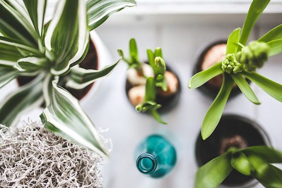 Houseplant Safety for Pets 1 Daily Mom Parents Portal