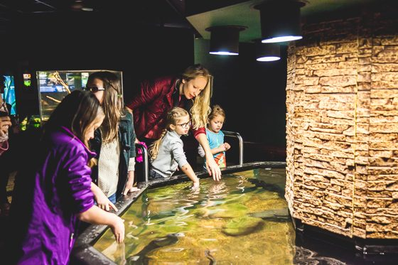 10 Reasons to Visit Chattanooga with Your Family This Spring 20 Daily Mom Parents Portal